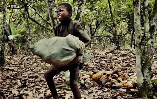 Child labor rising in West Africa cocoa farms despite efforts